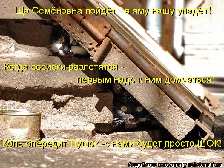 Котоматрица: Ща Семёновна пойдёт - в яму нашу упадёт! Когда сосиски разлетятся - первым надо к ним домчаться! Коль опередит Пушок -с нами будет просто ШОК!
