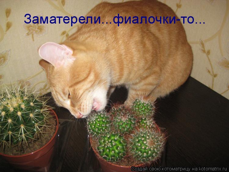 Котоматриця!)))) 862861