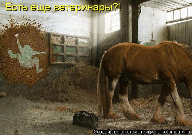 Котоматрица - Есть еще ветеринары?!