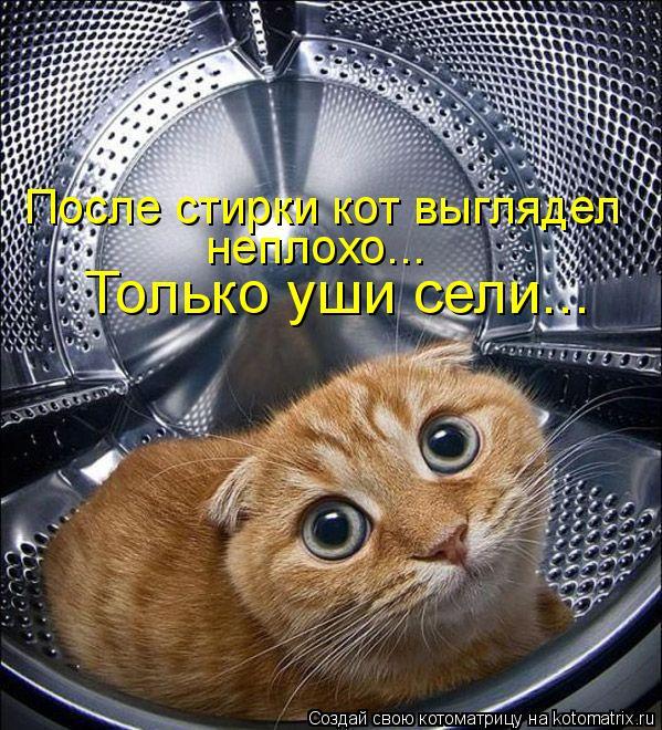 Только уши сели... После стирки кот выглядел неплохо...
