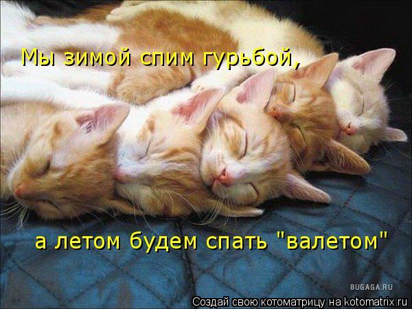 """Котоматрица: Мы зимой спим гурьбой, а летом будем спать """"валетом"""""""