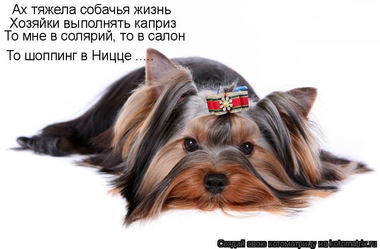 Котоматрица: Ах тяжела собачья жизнь Хозяйки выполнять каприз То мне в солярий, то в салон То шоппинг в Ницце .....