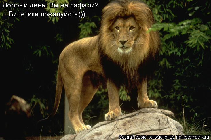 Котоматрица: Добрый день! Вы на сафари? Билетики пожалуйста)))