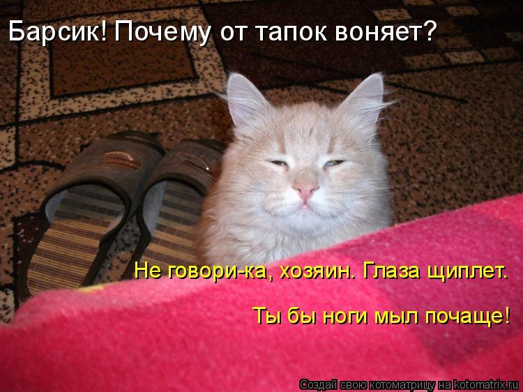 Котоматрица: Барсик! Почему от тапок воняет? Не говори-ка, хозяин. Глаза щиплет.  Ты бы ноги мыл почаще!