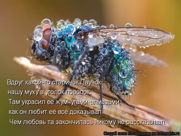 Котоматрица: Вдруг какой-то старичок Паучок нашу муху в уголок поволок. Там украсил её жумчугами-алмазами, как он любит её всё доказывал. Чем любовь та за