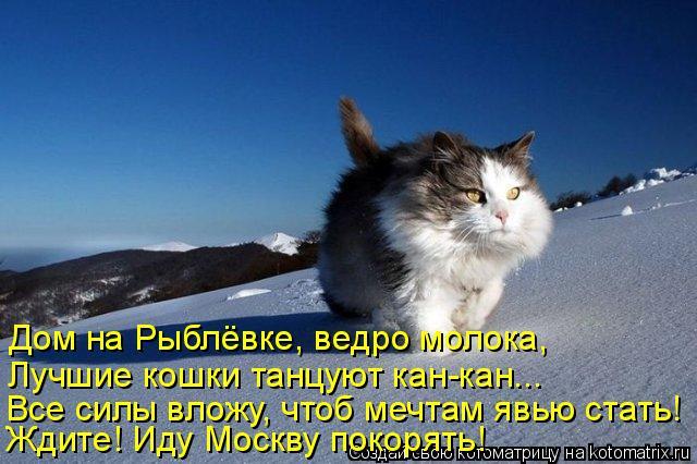 Котоматрица: Дом на Рыблёвке, ведро молока, Лучшие кошки танцуют кан-кан... Все силы вложу, чтоб мечтам явью стать! Ждите! Иду Москву покорять!