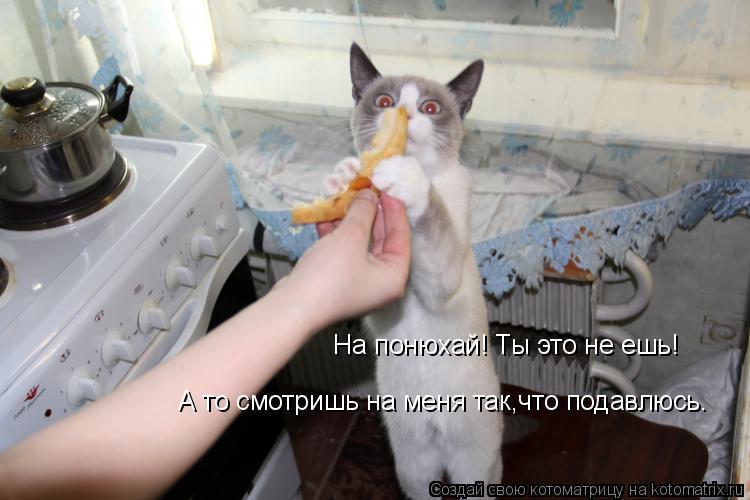 Котоматрица: На понюхай! Ты это не ешь! А то смотришь на меня так,что подавлюсь.