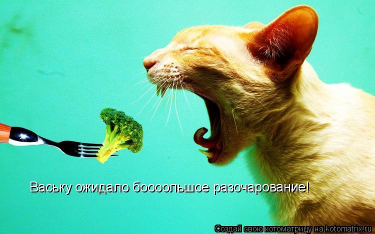 Котоматрица: Ваську ожидало боооольшое разочарование!