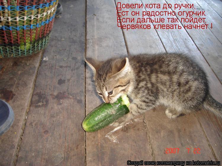 Котоматрица: Довели кота до ручки, Ест он радостно огурчик. Если дальше так пойдет, Червяков клевать начнет !