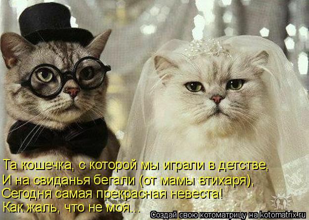 Котоматрица: Как жаль, что не моя... Сегодня самая прекрасная невеста! И на свиданья бегали (от мамы втихаря), Та кошечка, с которой мы играли в детстве,