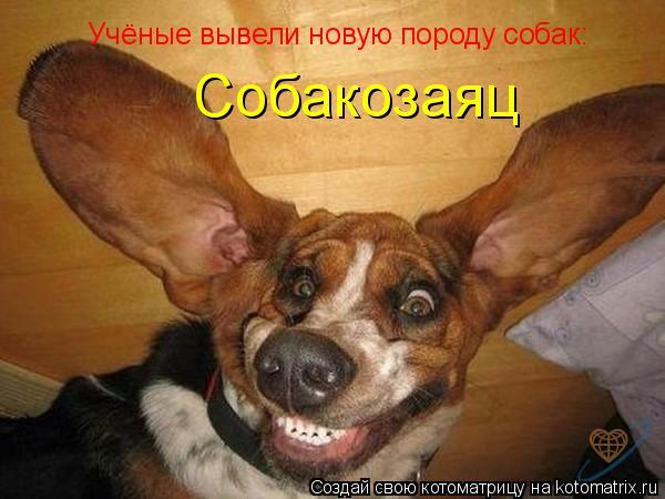 Котоматрица: Учёные вывели новую породу собак: Собакозаяц