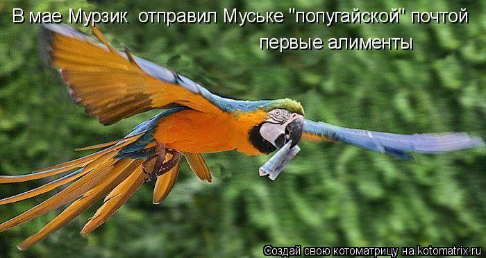 """Котоматрица: В мае Мурзик  отправил Муське """"попугайской"""" почтой  первые алименты"""