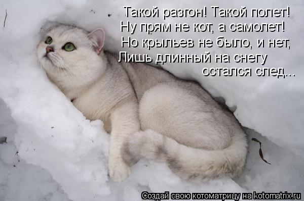 Котоматрица: Такой разгон! Такой полет! Ну прям не кот, а самолет! Но крыльев не было, и нет, Лишь длинный на снегу остался след...