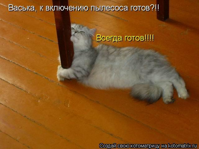 Котоматрица - Васька, к включению пылесоса готов?!! Всегда готов!!!!