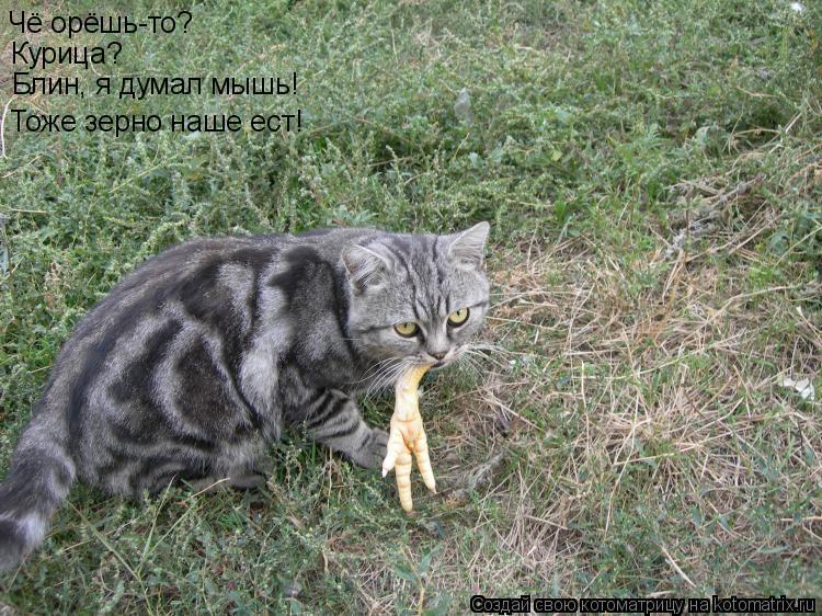 Котоматрица: Чё орёшь-то? Курица? Блин, я думал мышь! Тоже зерно наше ест!