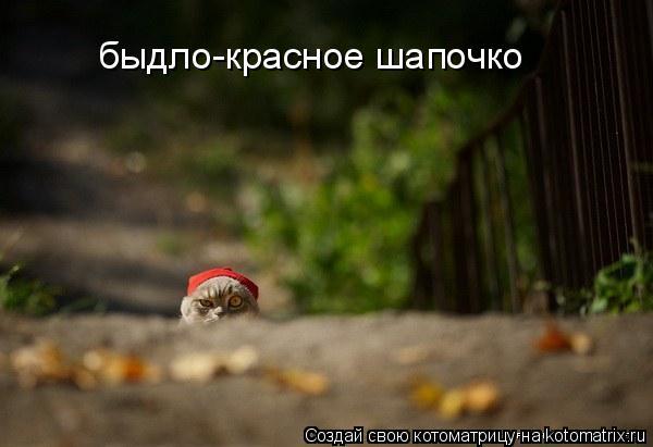 Котоматрица: быдло-красное шапочко