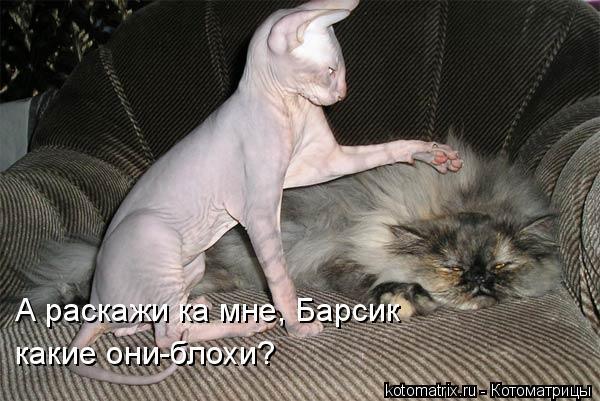 Котоматрица: А раскажи ка мне, Барсик какие они-блохи?