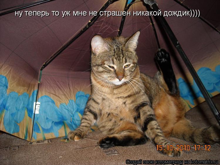 Котоматрица: ну теперь то уж мне не страшен никакой дождик))))