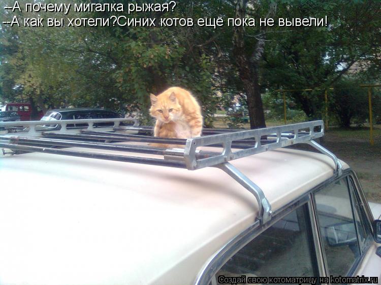 Котоматрица: --А почему мигалка рыжая? --А как вы хотели?Синих котов ещё пока не вывели!