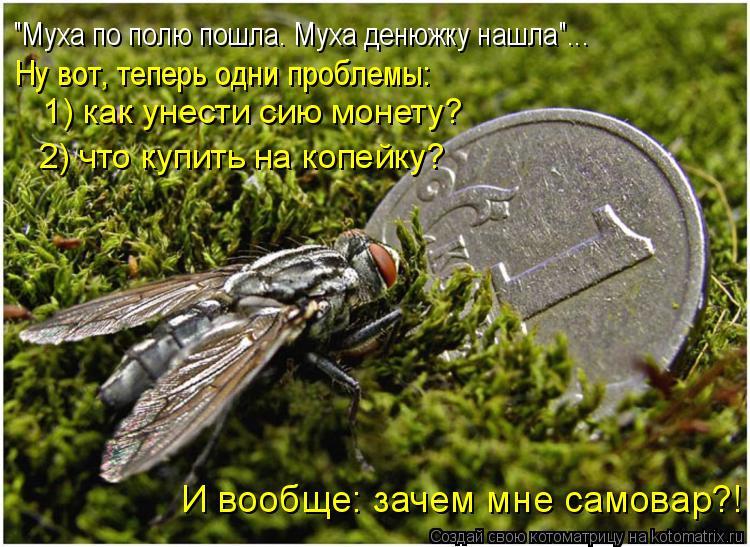 """Котоматрица: """"Муха по полю пошла. Муха денюжку нашла""""... Ну вот, теперь одни проблемы: 1) как унести сию монету? 2) что купить на копейку? И вообще: зачем мне са"""