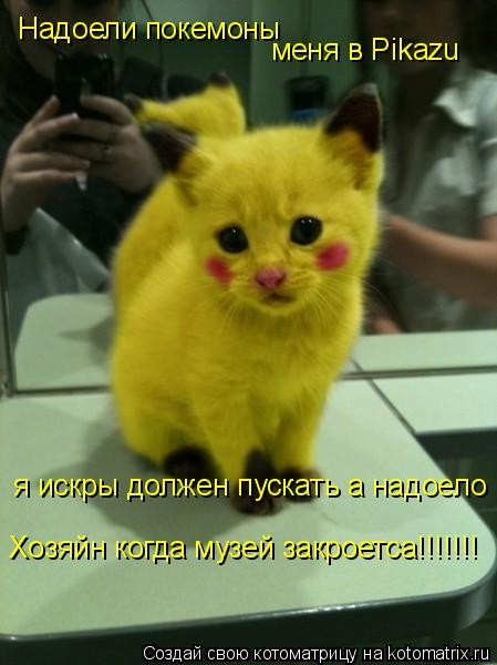 Котоматрица: Надоели покемоны  меня в Pikazu   я искры должен пускать а надоело  Хозяйн когда музей закроетса!!!!!!!