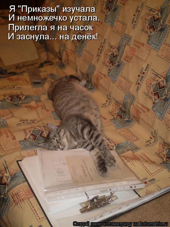 """Котоматрица: Я """"Приказы"""" изучала  И немножечко устала. Прилегла я на часок И заснула... на денёк!"""