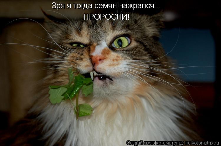 Котоматрица: Зря я тогда семян нажрался... ПРОРОСЛИ!