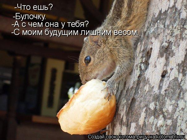 Котоматрица: -Что ешь? -Булочку. -А с чем она у тебя? -С моим будущим лишним весом.