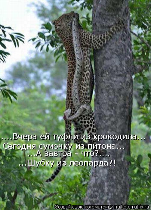 ...А завтра - что?.... ...Шубку из леопарда?! ....Вчера ей туфли из крокодила... Сегодня сумочку из питона...