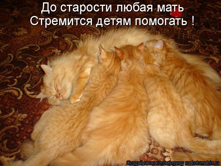 Котоматрица: До старости любая мать Стремится детям помогать !
