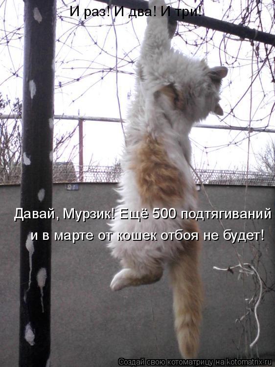 Котоматрица: Давай, Мурзик! Ещё 500 подтягиваний и в марте от кошек отбоя не будет! И раз! И два! И три!