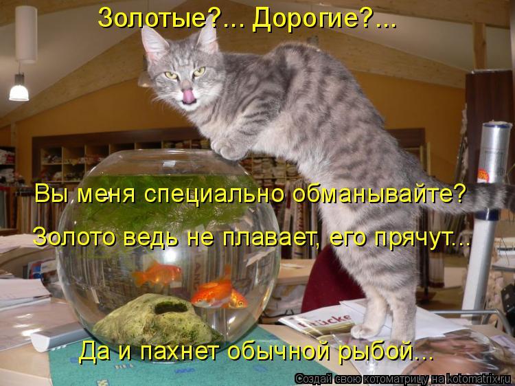 Котоматрица: Золотые?... Дорогие?...   Вы меня специально обманывайте?  Золото ведь не плавает, его прячут... Да и пахнет обычной рыбой...