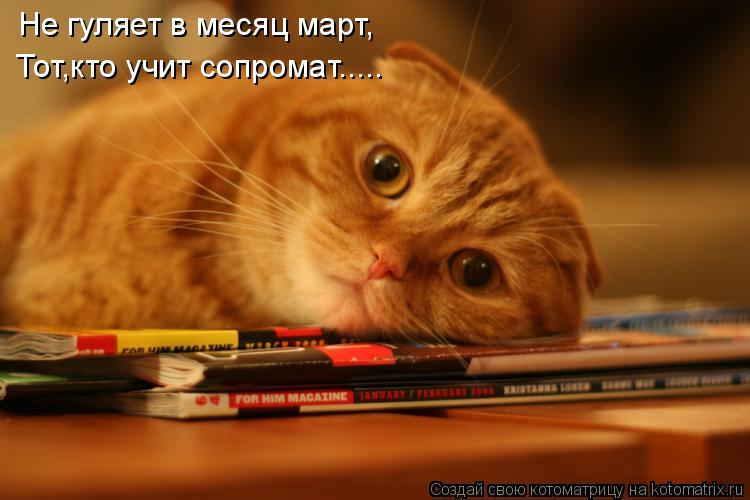 Котоматрица: Не гуляет в месяц март, Тот,кто учит сопромат.....