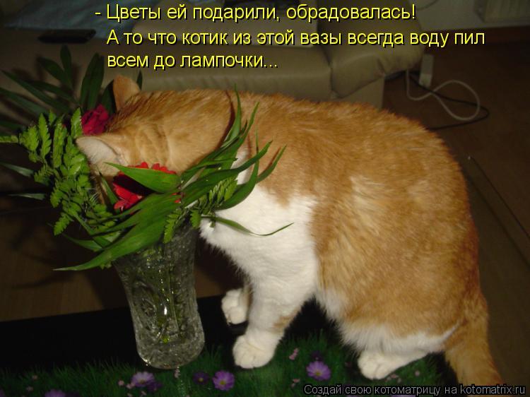 Котоматрица - - Цветы ей подарили, обрадовалась! А то что котик из этой вазы всегда