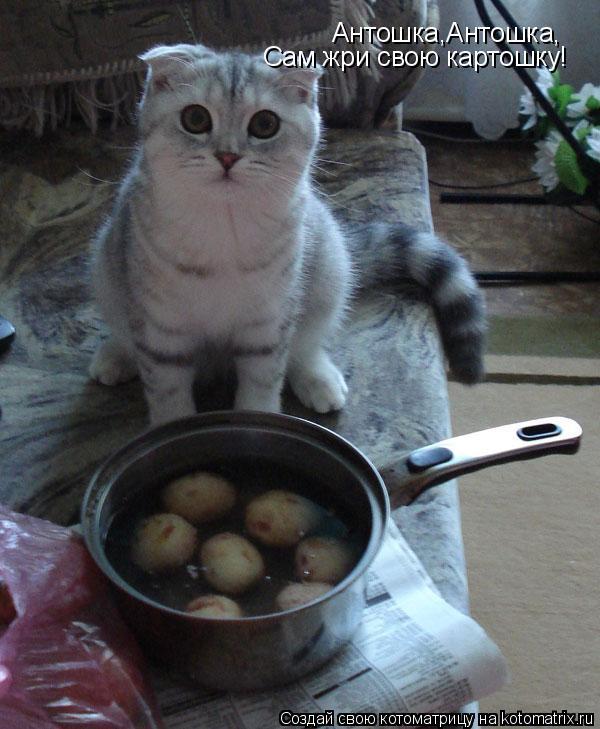 Котоматрица: Антошка,Антошка, Сам жри свою картошку!