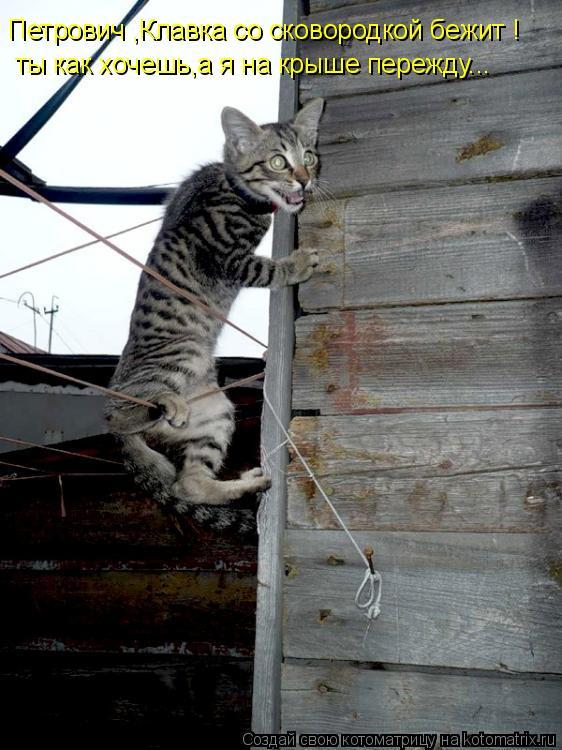 Петрович ,Клавка со сковородкой бежит ! ты как хочешь,а я на крыше пер