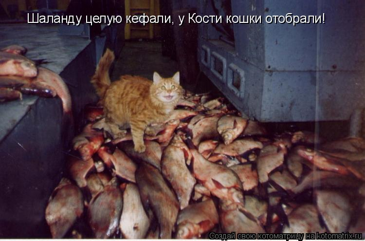 Шаланду целую кефали, у Кости кошки отобрали!