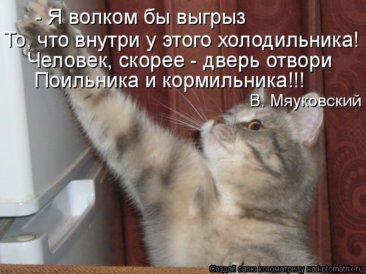 Котоматрица: - Я волком бы выгрыз То, что внутри у этого холодильника! Человек, скорее - дверь отвори Поильника и кормильника!!! В. Мяуковский