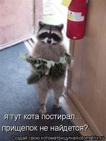 Котоматрица: я тут кота постирал... прищепок не найдется?