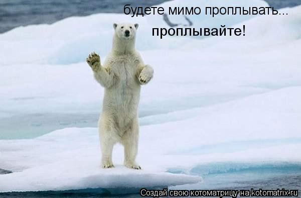 Котоматрица: будете мимо проплывать... проплывайте!