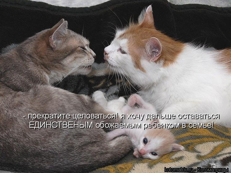 Котоматрица: - прекратите целоваться! я хочу дальше оставаться  ЕДИНСТВЕНЫМ обожаемым ребенком в семье!