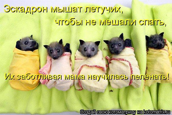 Котоматрица - Эскадрон мышат летучих, чтобы не мешали спать, Их заботливая мама науч