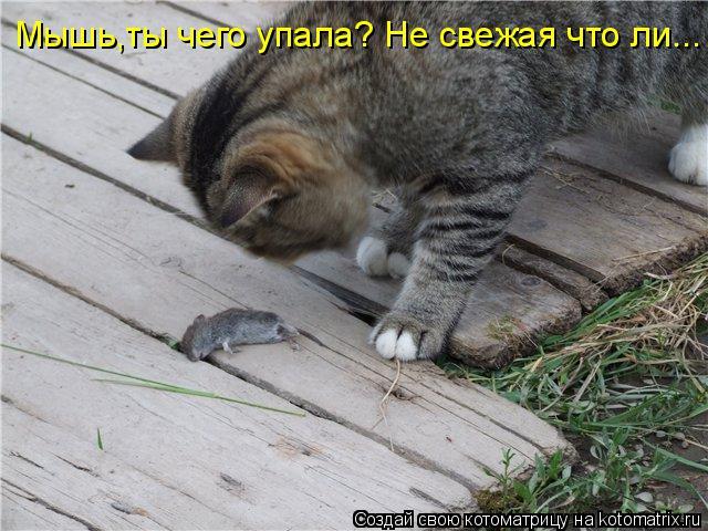 Котоматрица: Мышь,ты чего упала? Не свежая что ли...