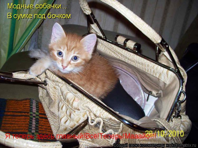 Котоматрица: Модные собачки... В сумке под бочком Я теперь здесь главный!Всё!Теперь!Мааайо!!!