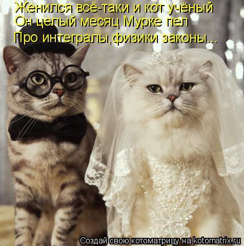 Котоматрица: Женился всё-таки и кот учёный Он целый месяц Мурке пел Про интегралы,физики законы...