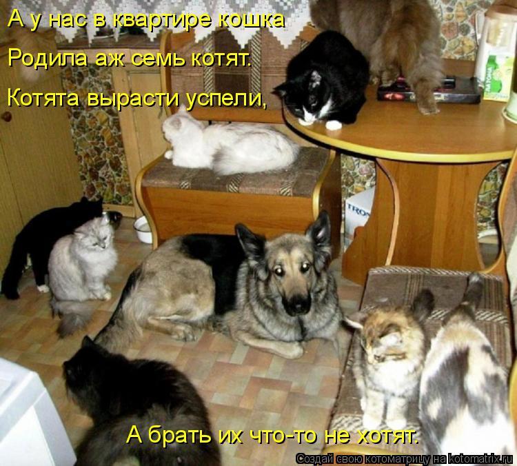 Котоматрица: А у нас в квартире кошка Родила аж семь котят. Котята вырасти успели, А брать их что-то не хотят.