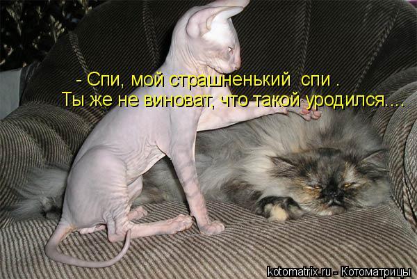 Котоматрица: - Спи, мой страшненький  спи . Ты же не виноват, что такой уродился....