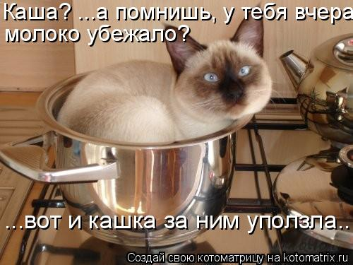 Котоматрица: Каша? ...а помнишь, у тебя вчера молоко убежало? ...вот и кашка за ним уползла...