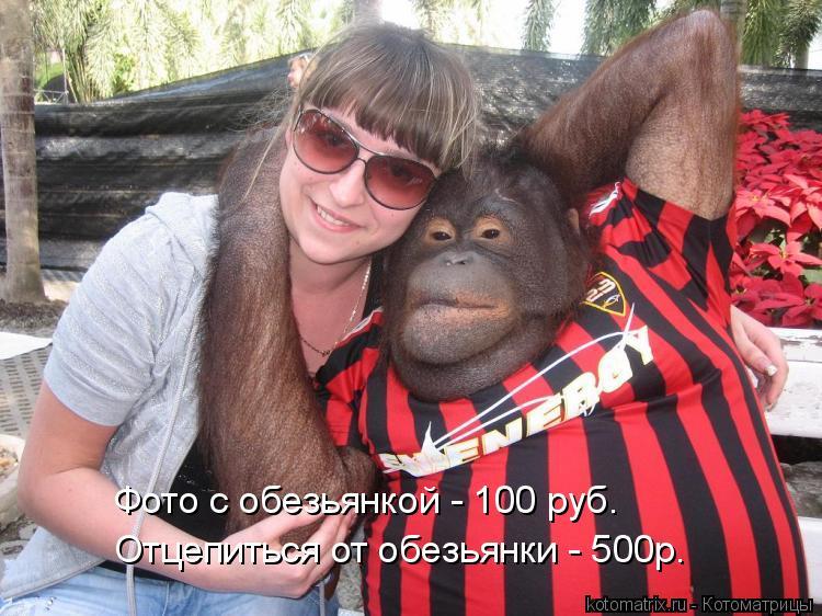 Котоматрица - Фото с обезьянкой - 100 руб. Отцепиться от обезьянки - 500р.