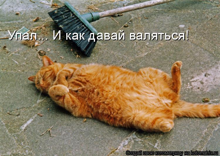 Котоматрица: Упал... И как давай валяться!